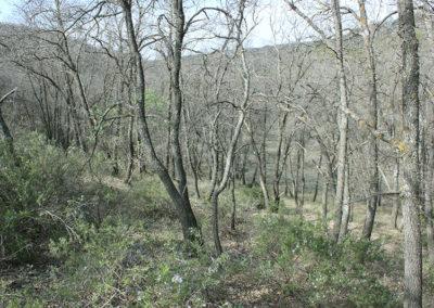 bosque-13