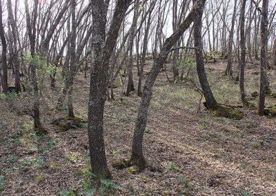 bosque-14